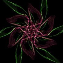 rose-15